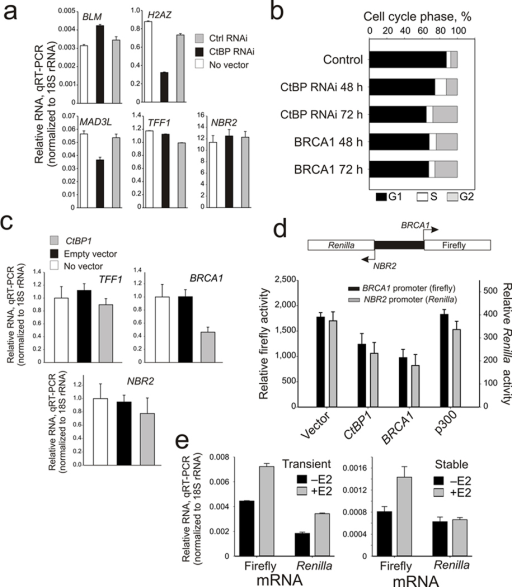 ctbp control of brca1 is gene specific  functionally in