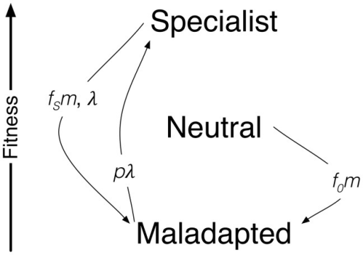 Schematic representation of the model definition.In rep | Open-i