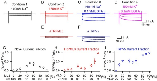 Stoichiometric analyses of TRPML3/TRPV5 currents.(A–D) Traces show currents at −150 mV recorded from HEK293 cells expressing TRPV5/TRPML3, in the presence of extracellular solutions containing 140 mM Na+ (condition 1, black), 150 mM K+ (condition 2, red), 140 mM Na+, 0.1 mM EGTA (condition 3, blue), and 150 mM K+, 0.1 mM EGTA (condition 4, pink). We hypothesized that the current recorded under condition 1 represents the novel conductance, the current under condition 2 consists of the novel conductance and TRPML3, the current under condition 3 is composed of the novel conductance and TRPV5, and finally, under condition 4, we expected that the recorded current consists of all three conductances. (E–F) Subtraction of A from B (in E) which represents pure TRPML3; subtraction of A from C (in F) which results in pure TRPV5. (G–I) HEK293 cells were transfected with TRPML3 and TRPV5 expression plasmids either pure (0% and 100%) and at molar ratios 1∶10 (10%), 1∶5 (20%), 2∶3 (40%), 1∶1 (50%), 3∶2 (60%), 5∶1 (80%) and 10∶1 (90%), respectively. Currents were elicited at −150 mV under conditions 1–3 and individual conductances for TRPML3 and TRPV5 were extracted as described in (E–F). Shown is the average fraction of novel current (G, black circles), TRPML3 (H, red triangles), and TRPV5 (I, blue triangles) is plotted against the fraction of TRPML3 over TRPV5 (G,H) and TRPV5 over TRPML3 (I) (n = 5–11).