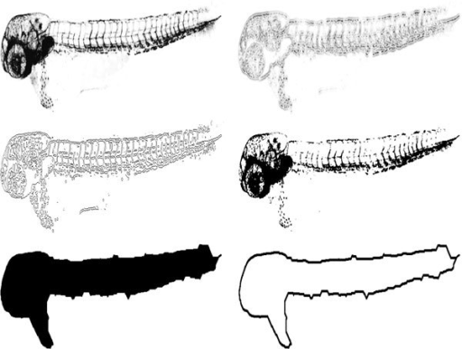 Segmentation procedure. Top left: Image from the green fluorescence channel. Top right: Image filtered with LoG. Middle left: Result from LoG edge detection. Middle right: Result from Otsu's threshold. Bottom left: Segmented image after all steps, including morphological closing. Bottom right: Outline of the fish. For illustration purposes, the images are presented with inverted grayscale values.