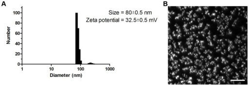 Particle characterization of the 599/siCIP2A complex.(A) Size distribution and zeta potential of the 599 peptide complexed with siCIP2A at a 50∶1 peptide-to-siRNA molar ratio 20 minutes after formulation in water. (B) Darkfield-based optical microscopy image of the 599 peptide complexed with siCIP2A at a 50∶1 peptide-to-siRNA molar ratio 20 minutes after formulation in water. Scale bar: 10,000 nm.