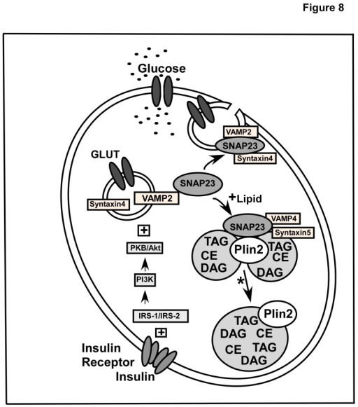 Schematic Diagram For Snare Mediated Regulation Of Gluc Open I
