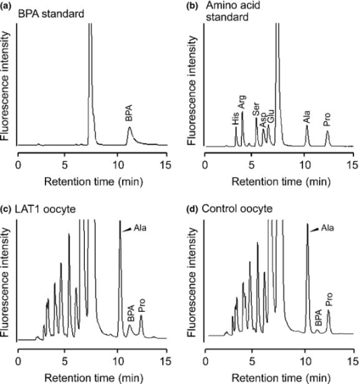Separation of p-boronophenylalanine (BPA) by HPLC. Chromatograms showing the separation of a BPA standard (0.2 pmol) (a), amino acid standards (0.2 pmol each) (b), a sample from the oocyte expressing LAT1 (c), and the control oocyte not expressing LAT1 (d). (a, b) The BPA peak was identified by retention time and spike study (not shown). Similarly, by comparison with amino acid standards and a spike study (not shown), the peaks neighboring BPA in oocyte samples were identified as alanine (Ala) and proline (Pro). (c, d) The LAT1-expressing oocyte and non-expressing control oocyte were incubated in the uptake buffer containing BPA. Samples from the oocytes were separated by HPLC. The increased BPA peak height in (c) showed that the uptake of BPA was mediated by LAT1. Arg, arginine; Asp, aspartic acid; Glu, glutamic acid; His, histidine; Ser, serine.
