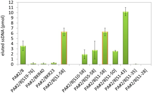 Binding abilities of the truncated aptamer variants in comparison to the full-length aptamer PA#2/8 to Protein A.Bead-based binding assays were performed using Protein A/Strep-MB and fluorescein-labeled ssDNA. Target-bound aptamers were eluted and quantified.