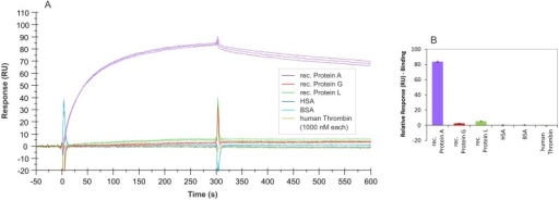 SPR interaction analyses regarding the specificity of aptamer PA#2/8.Biacore X100 / sensor chip CAP / ligand: 3'-biotinylated aptamer PA#2/8 with immobilization level of 1000–1200 RU / analyte: different proteins with a concentration of 1000 nM each (recombinant Protein A, Protein G, and Protein L in triplicate; HSA, BSA, and human Thrombin in duplicate). Double-referenced sensorgrams (A) are shown (reference surface modified with unselected SELEX library, buffer injection). Bar graph (B) of binding levels of the different proteins from the end of the association phases (after 300 s of injection) is presented.