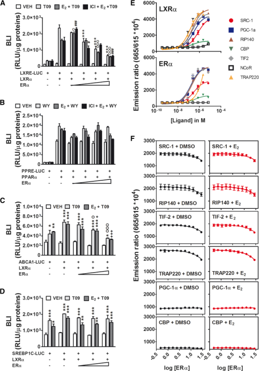 Inhibition of the Transcriptional Activity of LXRα by ERα: In Vitro Studies(A) HeLa cells were co-transfected with LXRα and the reporter LXRE-Luc in the presence or absence of ERα. Where indicated, LXRα agonist T0901317 (T09), E2 plus T09, and ERα antagonist ICI 182,780 (ICI) were added. The data indicate mean ± SEM, n = 4; each experiment was repeated three times. VEH, vehicle. ∗∗∗p < 0.001 versus LXRα/LXRE-Luc+T09; Op < 0.05 and OOOp < 0.001 versus LXRα/LXRE-Luc+E2+T09; #p < 0.05 and ###p < 0.001 versus LXRα/LXRE-Luc+ICI+E2+T09.(B) Effect of ERα on the transcriptional activity of PPARα. The cells were co-transfected with PPARα and the reporter PPRE-Luc in the presence or absence of ERα. Where indicated, the cells were treated with the PPARα agonist WY-14,643 (WY), E2 + WY, and ICI + E2 + WY. The data indicate mean ± SEM, n = 4; the experiment was repeated three times.(C and D) HeLa cells were co-transfected with LXRα and the reporter ABCA1-Luc (C) or SREBP1C-Luc (D) in the presence or absence of ERα. Treatments were done with vehicle, T09, or E2 + T09. The data indicate mean ± SEM, n = 4; each experiment was repeated three times. ∗p < 0.05, ∗∗p < 0.01, and ∗∗∗p < 0.001 versus VEH; Op < 0.05 and OOOp < 0.001 versus LXRα/ABCA1-Luc+T09; +p < 0.05 and +++p < 0.001 versus LXRα/ABCA1-Luc+E2+T09.(E) Identification of the co-activators of the LXRα (top) and ERα (bottom) proteins by FRET. SRC-1, PGC-1α, RIP140, CBP, TIF2, nuclear receptor corepressor (NCoR), and TRAP220. The data indicate mean ± SEM, n = 2; the experiment was repeated twice.(F) FRET analysis of the changes in the recruitment of co-activators by LXRα in the presence of increasing amounts of ERα stimulated with DMSO (dark lanes) or 5 nM E2 (red lanes). The data indicate mean ± SEM, n = 2; the experiment was repeated three times.BLI, bioluminescence imaging; RLU, relative light units.