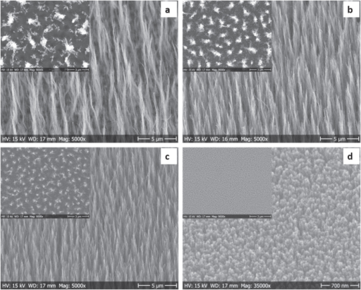 SEM images of CNFs grown by DC-PECVD for 2 h at different temperatures on palladium NPs using various PVP–Pd colloidal solutions given as (a) PVP:Pd 38:1, growth at 550 °C. (b) PVP:Pd 18:1, growth at 550 °C. (c) PVP:Pd 9:1, growth at 550 °C. (d) PVP:Pd 9:1, growth at 390 °C.