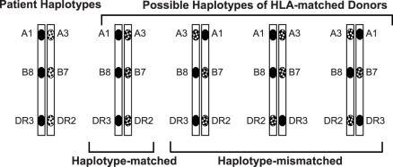 Schematic Illustration of the HLA Haplotypes of a Patient and 4 HLA Phenotypically Identical Potential DonorsData suggest that the use of the single haplotype-matched donor reduces acute graft-versus-host disease.