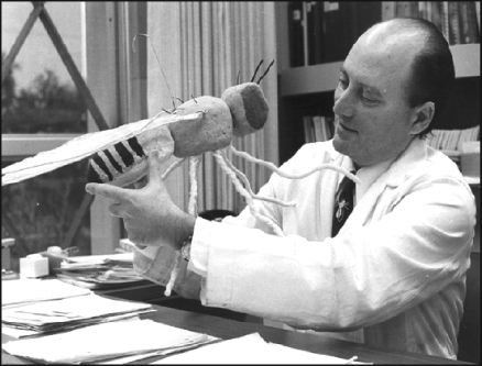 Seymour Benzer in his office at Caltech in 1974 with a big model of Drosophila. He had a great deal of respect for an animal that not only can perform many sophisticated behaviours that humans do—such as learning, courting, and keeping time—but can also walk on the ceiling and fly.