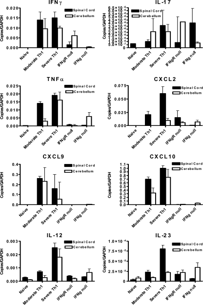 CNS expression of EAE-associated inflammatory proteins changes in the absence of an IFN-γ signal MOG35-55-specific T cell lines were generated in either C57BL/6 or IFN-γ–deficient mice and polarized to a Th1 phenotype. T cells were injected IV into either C57BL/6 or IFN-γR–deficient mice at 1 × 107 cells/mouse. Between 24 and 48 h after disease onset, mRNA was extracted from spinal cord and cerebellum and examined for inflammatory expression patterns using real time PCR as described in Materials and methods. Moderate Th1 tissue was extracted from animals that exhibited classical clinical scores of 1–2 in the 24–48 h after onset. Severe Th1 tissue was extracted from mice that exhibited classical clinical scores of 2.5–3.5 during the same period. The cells used to induce the severe EAE were injected in parallel into IFN-γR–deficient mice (IFN-γR ). The tissue in the IFN-γ– group was extracted from WT mice that received IFN-γ–deficient pathogenic T cells. The data are presented as mean ± SEM of 4–5 mice/group from two independent experiments.