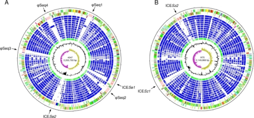 Schematic circular diagrams of the Se4047 (A) and SzH70 genomes (B).Key for the circular diagrams (outside to inside): scale (in Mb); annotated CDSs colored according to predicted function represented on a pair of concentric circles, representing both coding strands; orthologue matches shared with the Streptococcal species, Se4047 or SzH70, SzMGCS10565, S. uberis 0140J, S. pyogenes Manfredo, S. mutans UA159, S. gordonii Challis CH1, S. sanguinis SK36, S. pneumoniae TIGR4, S. agalactiae NEM316, S. suis P1/7, S. thermophilus CNRZ1066, blue; orthologue matches shared with Lactococcus lactis subspecies lactis, green; G+C% content plot; G+C deviation plot (>0%, olive, <0%, purple). Color coding for CDS functions: dark blue, pathogenicity/adaptation; black, energy metabolism; red, information transfer; dark green, surface-associated; cyan, degradation of large molecules; magenta, degradation of small molecules; yellow, central/intermediary metabolism; pale green, unknown; pale blue, regulators; orange, conserved hypothetical; brown, pseudogenes; pink, phage and IS elements; grey, miscellaneous. The positions of the four prophage and two ICESe present in the Se4047 genome, and two ICESz in the SzH70 genome, are indicated.