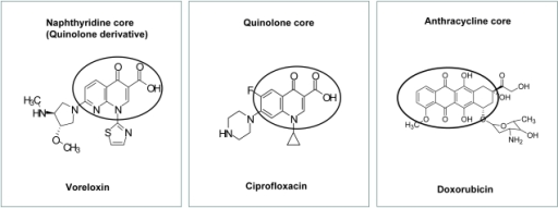 ribavirin structure activity relationship for quinolones