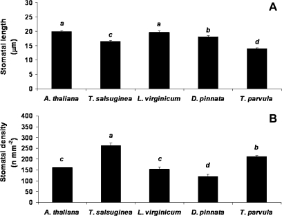 Stomatal length (A) and density (B) of selected Brassicaceae species. Values refer to 20 independent measures per leaf on three leaves per species (non-salinized control plants). Letters indicate differences at P <0.05 (n=60).