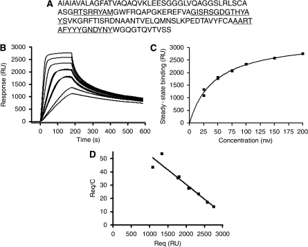 Protein sequence and surface plasmon resonance analysis of the anti-IGFBP7 sdAb 4.43. (A) Protein sequence of anti-IGFBP7 sdAb 4.43; CDR1, CDR2 and CDR3 are underlined. (B) Sensogram overlay showing 4.43 monomer binding to immobilised IGFBP7 at concentrations of 25, 25, 50, 50, 75, 75, 100 and 200 n. (C) Fitting of equilibrium binding data to a steady-state affinity model. (D) Scatchard plots of the equilibrium binding data.