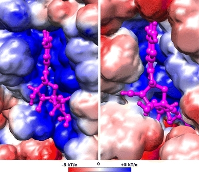 The electrostatic potential in the GTP/GDP binding site (GDP is shown in purple) projected on to van der Waals surfaces of EF-G (left) and EF-Tu:tRNA (right)