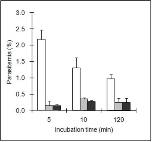 Improvement of invasion efficiency evaluation. Merozoites collected from culture supernatant were used to perform the invasion assay in RPMI 1640. Parasitemia was counted before (white bars), after Percoll separation (grey bars) and after 5 h incubation in culture medium (black bars). Each figure represents the average value of the triplicate assays and error bars indicate the standard deviation.