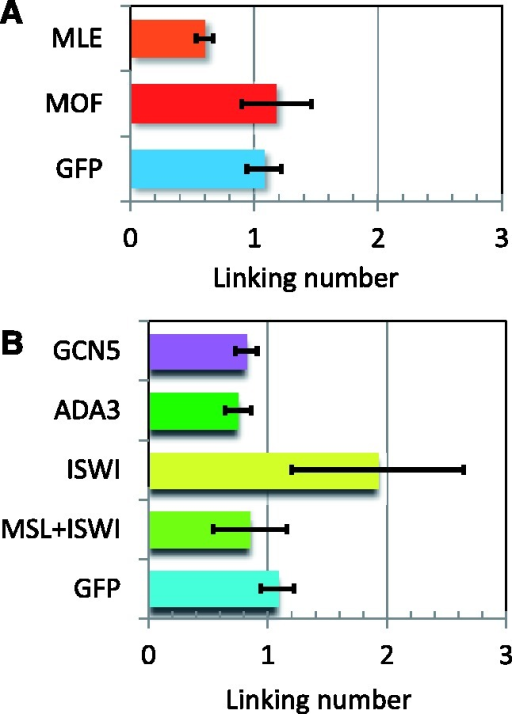 The differences in the median linking number of topoisomers isolated from S2 cells treated with RNAi to knockdown the indicated proteins were determined with respect to the linking number of plasmids isolated from cells in which MSL2, and therefore the MSL complex, was absent. (A) MOF knockdown, which leaves a complex of MSL1 + MSL2 + MLE, did not significantly change the topology compared with plasmid from compensated cells (GFP). MLE knockdown, which leaves a complex of MSL1 + MSL2, resulted in a partial or intermediate reduction in negative supercoiling of the plasmid. (B) ISWI knockdown produced more relaxed noncompensated and compensated topoisomers that migrated one linking number ahead of the similar plasmids from untreated cells. However, ADA3 and GCN5 knockdown in S2 cells did not significantly change the topology nor the migration of the isolated topoisomers.