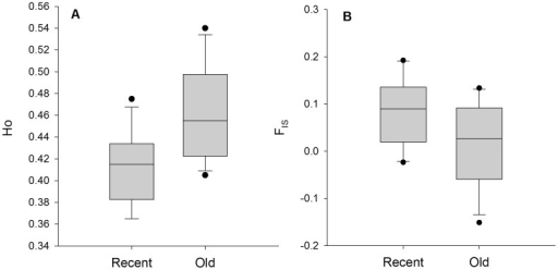 Difference in observed heterozygosity and inbreeding coefficient between recent and old populations.A. Boxplot for observed heterozygosity (HO). B. Boxplot for inbreeding coefficient (FIS).