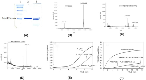 Confirming the protease scaffold in PI-PLC by proteolytic assays and inhibition studies.(A) Protease activity of PI-PLC. Substrate protein (UVI31+, lane 2) was incubated with PI- PLC (lane 3) overnight at 37°C, followed by sample analysis with 15% SDS-PAGE. Lane 1, molecular weight marker. (B) Control for UVI31+, with peak at 13.436 kDa. (C) UVI31+ treated with PI-PLC, showing fragmented peaks at 11.4 kDa and (D) another fragment of 2.0 kDa. (E) The inhibition of PI-PLC activity on phosphatidylinositol (PI) by trypsin inhibitor AEBSF. (F) The inhibition of PI-PLC activity on PI by trypsin inhibitor AEBSF in a mixture with phosphatidylcholine (PC), phosphatidylethanolamine (PE), and cholesterol (CH).