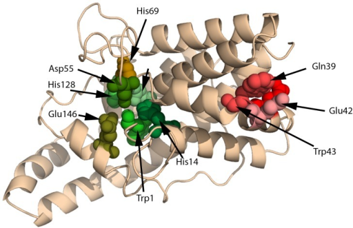 CLASP detects a glutamic protease motif in PC-PLC (PDBid:1AH7).The residues predicted to be responsible for the protease activity (Gln39, Glu42, and Trp43, in shades of red) does not coincide with its native active site (Trp1, His14, Asp122, HiS128, Glu146, Asp55, and His69, in shades of green). The motif is selected from a protein from the Eqolisin family of peptidases: PDBid:1S2B.