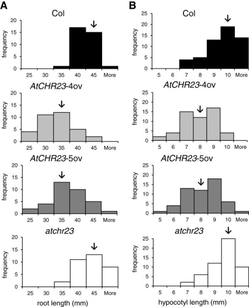 Frequency distribution of root (A) and hypocotyl (B) length. Seedlings (40 for each panel) were grown on agar plates for eight days at 23°C (A) or 28°C (B) in long-day conditions. In each panel, the arrow indicates the median length.