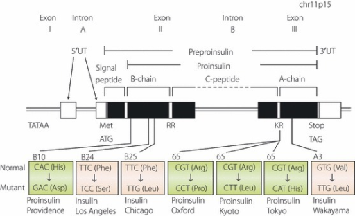 Schematic representation of human insulin gene struc | Open-i