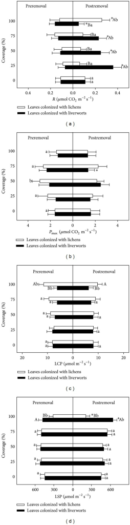 Estimated photosynthetic parameters of Photinia prunifolia colonized with lichens and liverworts, pre- versus postremoval (mean ± 1 SE) (n = 4). (a) Respiration rate (R), (b) maximum rates of photosynthesis (Pmax⁡), (c) light compensation point (LCP), and (d) light saturation point (LSP). The symbol * indicates the difference of photosynthetic parameters between pre- and postremoval treatment; different small and capital letters near the bars indicate the differences among leaves with different coverage and between leaves colonized with liverworts and lichens (P < 0.05).