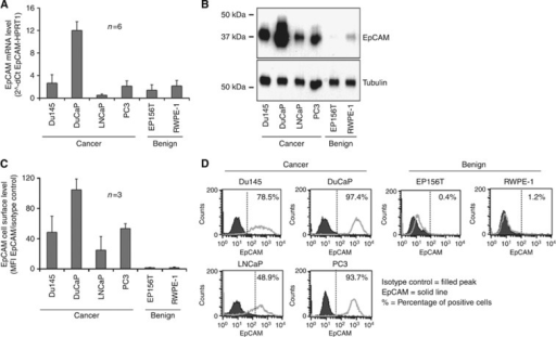 EpCAM overexpression in PCa prevails at protein level. EpCAM mRNA expression levels were determined by qRT-PCR (A), EpCAM protein levels by immunoblot (B), and EpCAM cell surface protein levels by extracellular immunostaining and flow cytometry (C and D) in Du145, DuCaP, LNCaP, PC3, EP156T, and RWPE-1 cells.