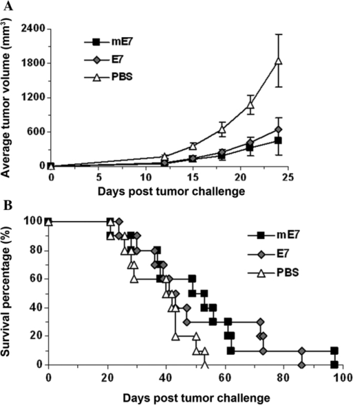 Inhibition of TC-1 growth by immunization with the mE7 protein. The mice were subcutaneously injected in the right flank with 1×105 TC-1 cells, and then immunized with the mE7 protein, supplemented with complete Freund's adjuvant, the following day. PBS and E7 were used as controls. Each group contained 10 mice. Seven days later, mice were immunized using the same solution, supplemented with incomplete Freund's adjuvant. (A) Tumor growth was monitored every three days for 24 days and (B) the survival rate was recorded. Tumor growth was determined by measuring the maximal and minimal diameters with a vernier caliper, and tumor volumes were calculated as follows: volume = (length × width2) × 0.52. PBS, phosphate-buffered saline; mE7, mutant non-transforming human papillomavirus 16 E7.