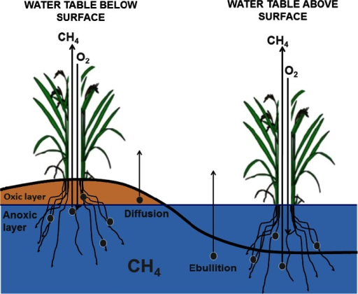 CH4 exchange within arctic tundra. CH4 is transported to the atmosphere directly through diffusion from the soil and indirectly through the roots and stems of vascular plants. In opposition, CH4 oxidation is aided by O2 diffusion directly into the soil and root aeration