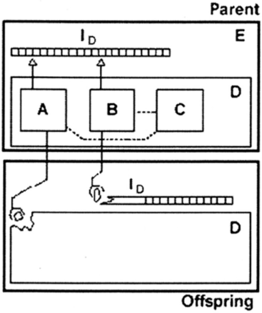 A self-reproducing automaton based on Von Neumann's logic (taken from [25]). ID, instruction tape; A, universal constructor; B, copier; C, controller; D, and self-reproducing automaton; E.