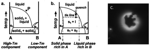 Binary phase diagrams containing coexisting solid and liquid phases. (a) At high temperatures, Components A and B mix completely in one uniform liquid phase. An arbitrary mixture of A and B is shown at Point P. (b) When the temperature is quenched, the phase boundary is crossed, and the system separates along the tie-line into a solid phase rich in Component A and a liquid phase rich in Component B (taken from [46]). (c) The fluorescence micrograph for phase separated binary GUV composed of 1,2-dipalmitoyl-sn-glycero-3-phosphoethanolamine (DPPE) (rich in solid phase) and 1,2-dioleoyl-sn-glycero-3-phosphocholine (DOPC) (rich in liquid phase). s, solid.