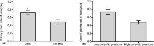 Effect of ant tending and parasitoid density on mealybug colony growth.(A): Ant tending; (B): Parasitoid density.