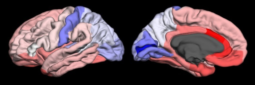 Lateral (left) and medial (right) views of CNR1 gene expression data projected onto the FreeSurfer cortical regions in the left hemisphere of the fsaverage brain template. Expression (log2 intensity) ranges from 5 (blue), 5.92 (white), and red (6.83).