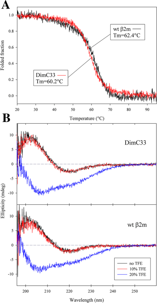 Thermal stability and Far-UV spectra analysis by circular dichroism.(A) Temperature ramps for DimC33 in red and wt β2m in black monitored at 202 nm, temperature slope 50 °C/h. Signals were reported as fractional variation of the total change. The melting temperature (Tm) values for DimC33 and wt β2m are shown in the graph. (B) Far-UV spectra for DimC33 and wt β2m in a buffer containing 100 mM sodium chloride, 50 mM sodium phosphate buffer pH 7.4, recorded under three different conditions: No TFE (black curves); in presence of 10% (v/v) TFE (red curves); and in 20% (v/v) TFE (blue curves).