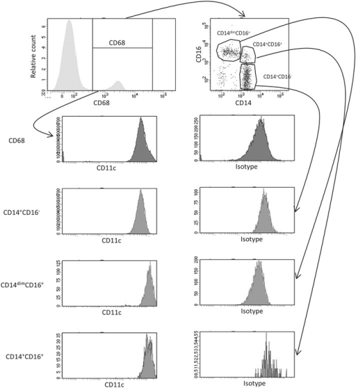 "Total number of circulating monocyte populations in diabetic patients and healthy controls. Representative dot-plot and scatter-plots of CD14 vs CD16 and their expression of CD11c is shown after first identifying the cells using gating strategy in Additional file 1: Figure S1. A total of 2 ml blood was analysed and the total number of each cell population was calculated as described in the ""Methods"" section"