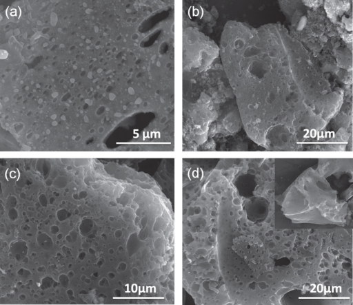 SEM images of (a) SC-700, (b) SC-800, (c) SC-900 and (d) SC-1000 showing the formation of porous wrinkled surfaces during high temperature treatment.