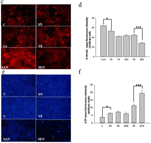 Protective effect of nanoemulsion against oxidative damage in AML-12 cells after H2O2 exposure. (a) Lipid peroxidation in AML-12 cells was detected with polyclonal anti-HNE antibody and DAB counterstain; (b) Protein carbonyl content of AML-12 cells was detected with DNP-specific antibody; (c) 8-OH-dG levels in AML-12 cells, which reflected the binding of avidin-TRITC, were analyzed using fluorescence microscopy; (d) The mean fluorescence intensity of avidin was quantified using ImageJ software; (e) Effect of nanoemulsion on intracellular ATP level was measured using FITC-labeled antibody; (f) ATP fluorescence intensity was quantified by ImageJ software. C, control; SN, empty saponin nanoemulsion; VA, vitamin A; SAN, saponin nanoemulsion of vitamin A; VE, vitamin E; SEN, saponin nanoemulsion of vitamin E. All values are represented as mean ± SEM from three or more independent studies. *** p < 0.001; * p < 0.05.