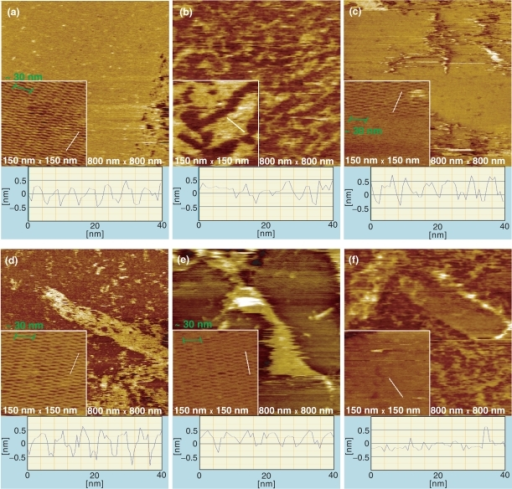 AFM images and section profiles of self-assembled 2D DNA arrays of DXAB tiles with or without heat treatment in buffer solutions. The scan sizes of images are 800 nm × 800 nm for large images and 150 nm × 150 nm for inset images. The section profiles correspond to the white lines in the inset images. (a) Non-UV-exposed DNA arrays without heat treatment. (b) Non-UV-exposed DNA arrays after heating at 40°C in buffer solutions. (c) UV-exposed DNA arrays without heat treatment. UV-exposed DNA arrays after heating at 40°C (d), 45°C (e) and 50°C (f) in buffer solutions.