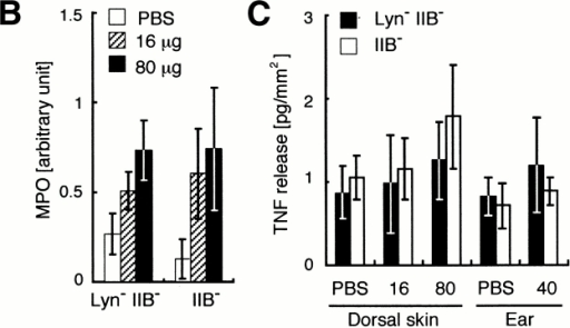 Reverse-passive Arthus reaction in Lyn−IIB− and control (IIB−) mice evoked by IgG immune complexes. Each mouse was treated with intradermal injection of 0 (PBS), 16, or 80 μg of rabbit anti-OVA IgG per site followed by intravenous injection of 1 mg of OVA in 0.2 ml saline. (A) Photomicrographs of a representative lesion of the Arthus reaction at 8 h after antigen challenge. Hematoxylin and eosin staining. Original magnifications: ×40 or ×1,000 as indicated in each photomicrograph. (B) MPO activity in a skin lesion at 8 h after antigen challenge. Mean ± SD of five mice is indicated. One unit represents MPO activity in 0.25 μl of whole blood sample. (C) Amount of TNF-α released in skin lesions at 3 h after antigen challenge. Each column represents the mean ± SD of TNF-α density (pg/mm2) in skin lesions obtained from five mice.
