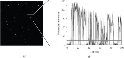 Evaluation of QD blinking.  (a) Typical image of immobilized QDs. Due to their different brightness, some spots appear larger than others. Single QDs are identified by the size of their point spread function and selected for subsequent analysis. Image size is 40 × 40 μm2. (b) Typical intensity trace of a single QD under continuous excitation. The grey line indicates an arbitrary threshold used to separate on-events from off-events. The threshold is usually set to 2–3 standard deviations above the background noise level, which is determined from nearby pixels containing no QD.