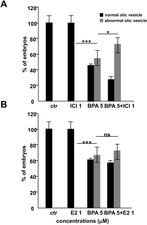 BPA effect on otolith development is estrogen receptor-independent. Morphology of the inner ear of zebrafish embryos at 48 hpf following exposure to BPA with or without ER antagonists (ICI 182 780) or agonists (17-β estradiol, E2). Treatment with either 1 μM ICI (A) or 1 μM 17-β estradiol (B) from 5 to 48 hpf does not induce any malformation of the developing semi-circular canals nor otoliths. Moreover, the BPA-induced otolith phenotype is not rescued when embryos are co-treated with BPA 5 μM +ICI 1 μM (A) or BPA 5 μM +βE2 1 μM (B). Interestingly, co-treatment with BPA 5 μM +ICI 1 μM lead to in increased ratio of affected otolith than a treatment with BPA 5 μM alone (A). On the other hand co-treatment with BPA 5 μM +βE2 1 μM gives a similar ratio than a treatment with BPA 5 μM alone (B).