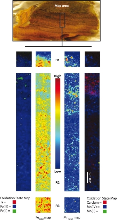 X-ray microprobe fluorescence mapping of an intact Fe/Mn iron microbial mat from Ula Nui. Center maps for Regions 1, 2, and 3 (R1, R2, R3) show total Fe and Mn distributions, while outer maps are tricolor maps that include the redox distribution for Fe(II)/Fe(III), and total Ti (left), as well as Mn(II)/Mn(IV), showing total Ca (right).