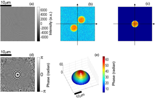 Surface profile of a 40 microns diameter polystyrene microsphere measured using our single-shot full-field reflection phase microscope. (a) Interferogram after subtracting the no fringe image representing the DC signal, (b) amplitude component of the 2-dimensional Fourier transform of (a), (c) spatially filtered image of (b), (d) phase component of the inverse Fourier transform of (c), and (e) unwrapped phase image derived from (d).