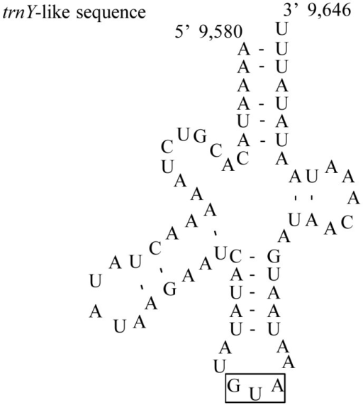 Predicted secondary structure for trnY-like sequence found in intergenic spacer between trnE and trnF.The rectangular boxes indicate the respective anticodons, and the nucleotide position is indicated at the beginning and end sites of the structures.