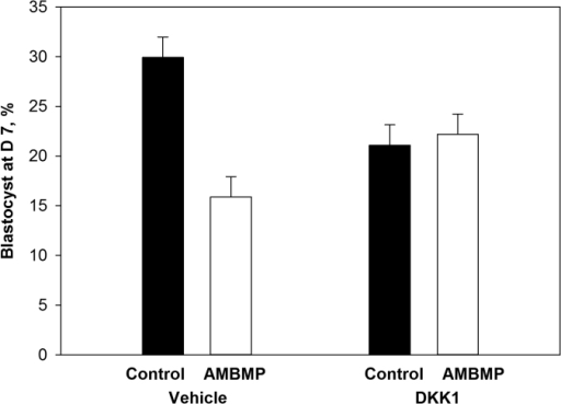 Co-treatment of bovine embryos at day 5 after insemination with 100 ng/ml Dickkopf-related protein 1 (DKK1) reduces the inhibitory effect of a WNT agonist (AMBMP) on development to the blastocyst stage.Data are least-squares means ± SEM of results from 5 replicates. The percent of oocytes becoming blastocysts at day 7 was affected by agonist (P = 0.02) and the agonist by DKK1 interaction (P = 0.01).