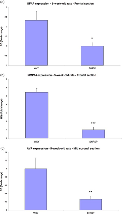 Validation of significant changes in gene expression of (a) GFAP, (b) MMP14 and (c) AVP in 5-week-old rats using qRT-PCR. Bars represent the difference in fold change between WKY and SHRSP. Error bars represent the standard error of the mean. Each bar represents n = 4 rats. *P < 0.05. **P < 0.01. ***P < 0.001. (a) GFAP mRNA expression was significantly reduced in the frontal section of SHRSP. (b) MMP14 mRNA expression was significantly reduced in the frontal section of SHRSP. (c) AVP mRNA expression was significantly reduced in the mid-coronal section of SHRSP.