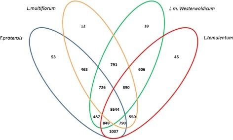 Orthologous groups distribution. The Venn diagram shows the distribution of shared and divergent orthologous groups from an OrthoMCL analysis of Lolium-Festuca complex proteomes, based on non-redundant dataset. The numbers in each division show the amount of groups for each combination.