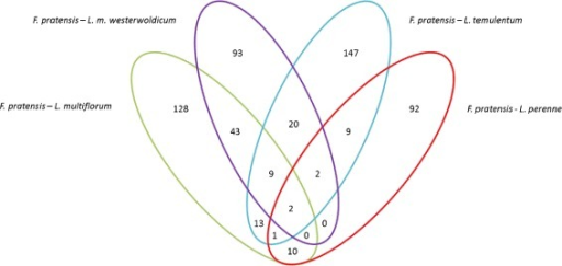 Organisation of proteins under positive selection inFestuca toLoliums comparison. The diagram show the number of proteins under positive selection between Festuca and analyzed Lolium species.