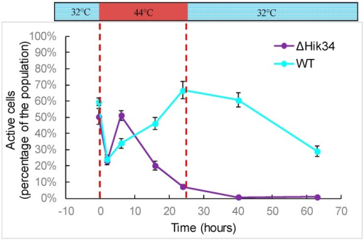Analysis of cell activity. Dashed lines mark time of heat shock. Results represent a typical data of two independent experiments. Error bars indicate standard deviations from three technical repetitions.